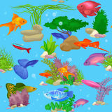 Aquarium fish, seaweed underwater seamless pattern vector illustration Royalty Free Stock Images