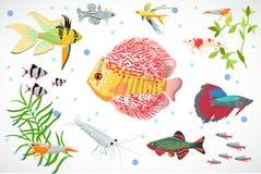 Aquarium fish, seaweed underwater seamless pattern vector illustration. Set of aquarium fish, seaweed underwater composition vector illustration Stock Photo