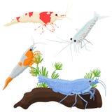 Aquarium fish, seaweed underwater seamless pattern vector illustration. Set of aquarium fish, seaweed underwater composition vector illustration Royalty Free Stock Images