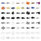 Aquarium fish set icons. In cartoon style. Big collection of aquarium fish vector symbol stock Royalty Free Stock Images