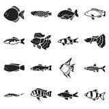 Aquarium fish set icons in black style. Big collection aquarium fish vector symbol stock illustration Royalty Free Stock Image