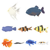 Aquarium fish set icons in cartoon style. Big collection of aquarium fish vector symbol stock illustration. Aquarium fish set icons in cartoon style. Big Stock Image