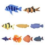 Big collection of aquarium fish vector symbol stock illustration. Aquarium fish set icons in cartoon style. Big collection of aquarium fish vector symbol stock Stock Photos