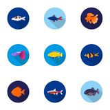 Aquarium fish set icons in flat style. Big collection of aquarium fish vector symbol stock illustration. Aquarium fish set icons in flat style. Big collection of Royalty Free Stock Photos