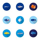 Aquarium fish set icons in flat style. Big collection of aquarium fish vector symbol stock illustration. Aquarium fish set icons in flat style. Big collection of Royalty Free Stock Photos