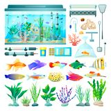 Aquarium and Fish Set of Icons Vector Illustration. Aquarium and fish set of icons, various types of plants with stones, lamp and equipment for domestic pet care Royalty Free Stock Image