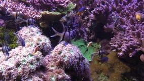 Aquarium fish 5. Shooting a fish in a beautiful aquarium stock footage