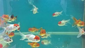 Aquarium fish swimming in the water meditation relaxing stock video footage