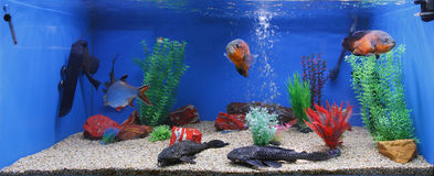 Aquarium fish tank. Large home aquarium fish tank stock photography