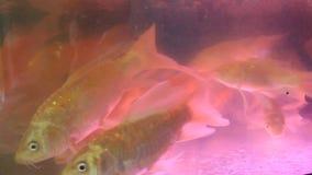 Aquarium fish tank stock video