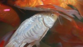 Aquarium fish tank stock video footage