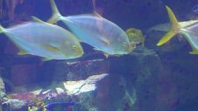 Aquarium, Fish Tank, Coral Reef, Animals, Nature. Aquarium, Fish Tank, Coral Reef Animals Nature stock video footage