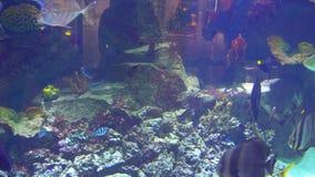 Aquarium, Fish Tank, Coral Reef, Animals, Nature. Aquarium, Fish Tank, Coral Reef Animals Nature stock footage