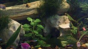 Aquarium, fish tank, coral reef, animals, nature. Blackmagic ursa mini 46k stock video footage