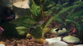 Aquarium, fish tank, coral reef, animals, nature. Blackmagic ursa mini 46k stock footage