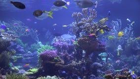 Aquarium, Fish Tank, Marine Animals Stock Photos