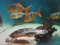 Aquarium. With fish and turtle Stock Photo