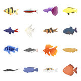 Aquarium fish 16 vector icons set in cartoon style. Aquarium fish 16 vector icon set in cartoon style for web design Royalty Free Stock Photos