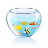 Aquarium with fish  Stock Photo