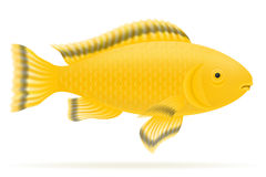 Aquarium fish vector illustration. Isolated on white background Royalty Free Stock Photo