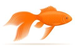 Aquarium fish vector illustration. Isolated on white background Stock Images
