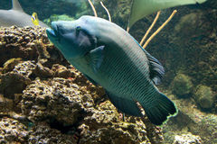 Aquarium fish Stock Photos