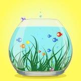 Aquarium fish water colored Stock Photo