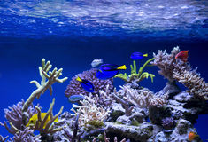 Aquarium fish. The aquarium will delight You with its unforgettable beauty of the underwater world Royalty Free Stock Photos