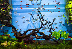 Aquarium. An aquarium with fish will delight you with their unforgettable beauty of the underwater world stock photo