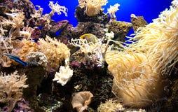 Aquarium with fishes Stock Photos