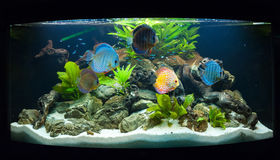 Aquarium fishes Stock Photos