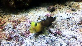 Aquarium fishes floating closeup. FullHD video stock video