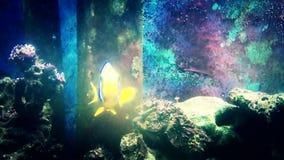 Aquarium fishes floating closeup. FullHD video stock footage