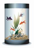 Aquarium with fishes Royalty Free Stock Image