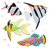Aquarium fishes: great collection of highly detailed illustrations with tropical tank fishes. Stock Photography