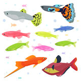 Aquarium fishes: great collection of highly detailed illustrations with tropical tank fishes. Royalty Free Stock Image
