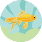 Aquarium fishes: highly detailed illustration of Royalty Free Stock Images