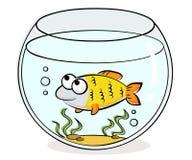 Aquarium with funny fish. Illustration of aquarium with funny fish Stock Images