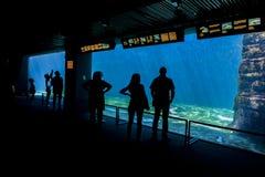Aquarium of Genoa, Italy Stock Images
