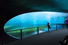 Aquarium of Genoa Royalty Free Stock Image