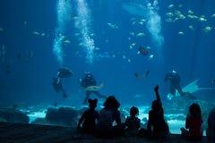 Aquarium. A giant blue aquarium with fish whale shark manta ray Royalty Free Stock Image