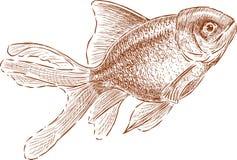 Aquarium gold fish Royalty Free Stock Photos