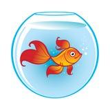 Aquarium with Golden Fish. Glass Aquarium with magic Golden Fish in water Stock Image