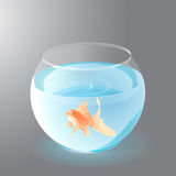 Aquarium with Golden Fish Royalty Free Stock Image