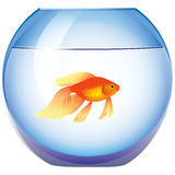 Aquarium with goldfish Royalty Free Stock Images
