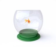 Aquarium with Goldfish in 3D Royalty Free Stock Images