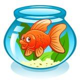 Aquarium with goldfish Stock Image
