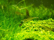 Aquarium-grünes Gras Lizenzfreie Stockfotografie