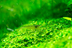 Aquarium Green Grass Royalty Free Stock Images