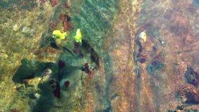 Aquarium, group of fish under the sea, fish knife stock video
